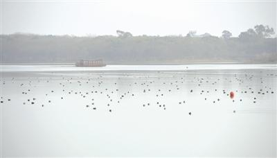 市民反映青龙湖游船扰鸟 管理方回应:坐趟船再讨论