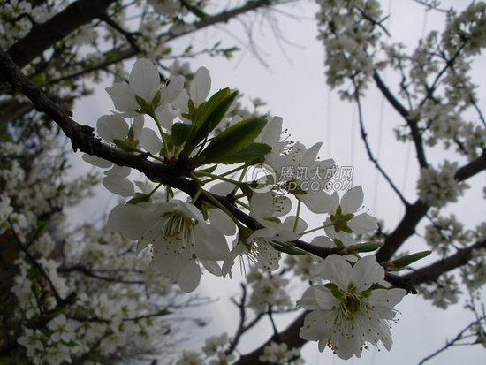 """oneday百姓摄影行动""归来 享金堂花海绚烂"