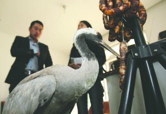 成都男子田里捡只受伤鹤 系国家二级保护动物(图)