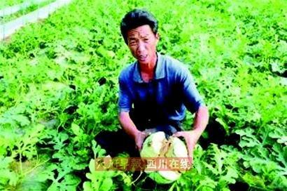 膨大剂谣言致攀枝花西瓜滞销 每斤仅售0.2元