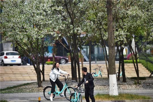 蓉城街巷春色早满园 特色街道飞花迷人眼