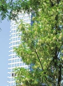 新葡京赌场网址街头最美行道树 你注意到了吗
