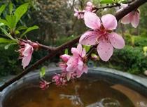 云溪温泉暖春三月特惠