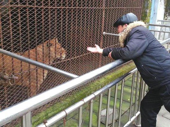 动物园老板和非洲狮打招呼。 巴中南龛动物园搬迁在即,近150只动物何处安身? 莫吼,莫吼,吃的来了!昨日上午,巴中市原南龛动物园老板许正江一边安抚笼子内的非洲狮,一边使劲扔进去几块鲜肉。这些食量颇大的肉食动物,让他承受了很大的经济压力。