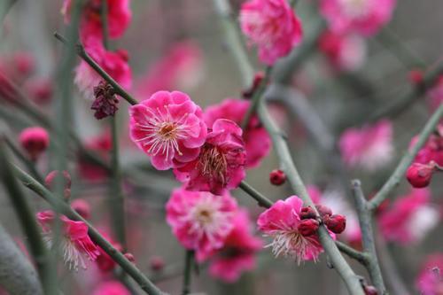 最新赏花攻略:成都市区及周边8大赏花好去处