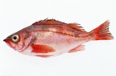 鱼身上2个部位千万别吃