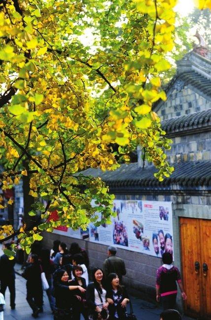 锦里银杏变黄 法国游客与亲人视频享美景(图)