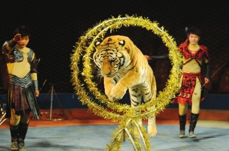 金沙太阳节接待游客28万 生死轮获最高好评