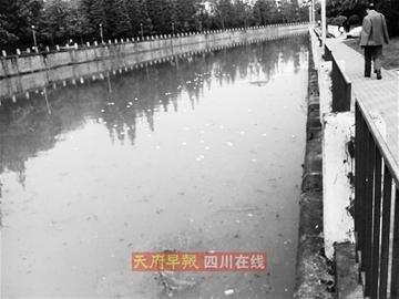 """成都府南河馒头绵延几公里 老人""""伤心""""丢弃"""