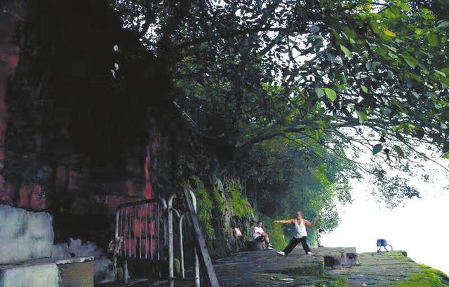 """乐山市区多棵树被砍引质疑 网友感叹""""乡愁没了"""""""