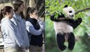 旅美大熊猫回国众人不舍