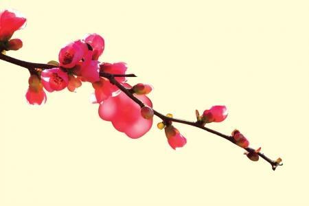 成都本周末气温升至19℃ 市民可到龙泉山赏桃花(图)