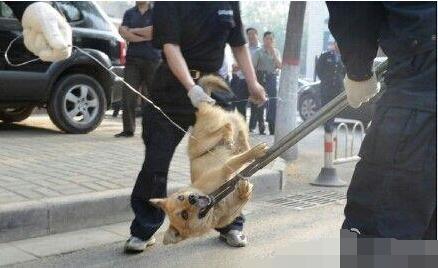 巴中清江杀狗令被批残忍 官方称为群众安全着想(图)