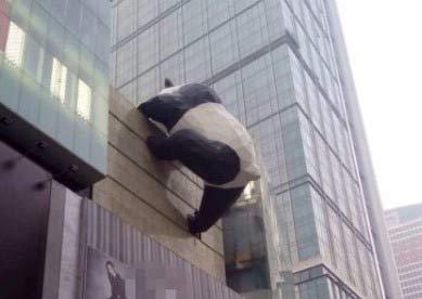 """成都春熙路现""""大熊猫""""爬楼"""