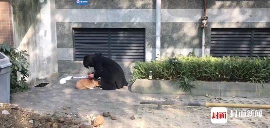 女子捡狗索酬不成后摔死小狗 凌晨在派出所大哭道歉