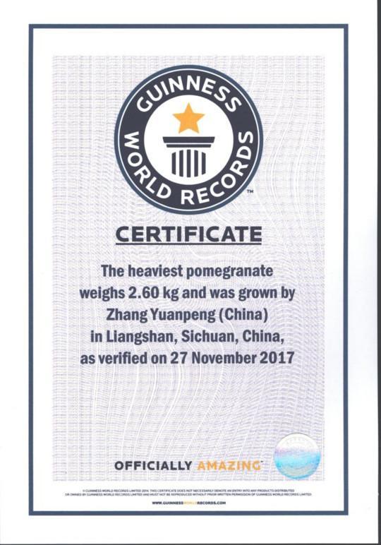 全球最重的石榴 单个5.2斤刷新吉尼斯世界记录
