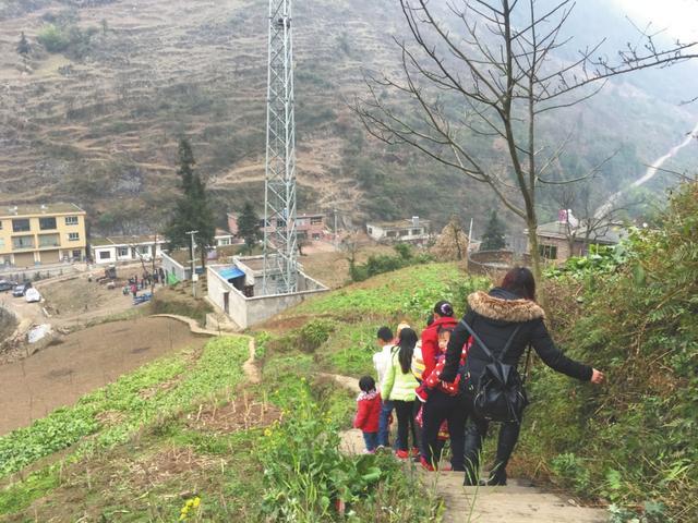 千年银杏藏泸州某深山 村民自筹资金修建赏杏路(图)