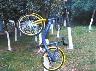 共享单车成都遇尴尬:被上锁、挂上树