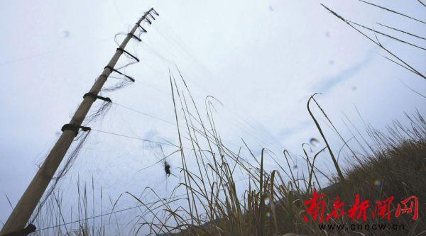 南充嘉陵江畔湿地现捕鸟网 市民联手将其拆除(图)