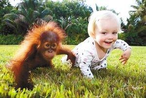 美国女婴与小猩猩一见如故 两年后重逢再叙旧情