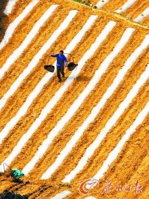 全球食品价格创新高 代表建议提高种粮补贴