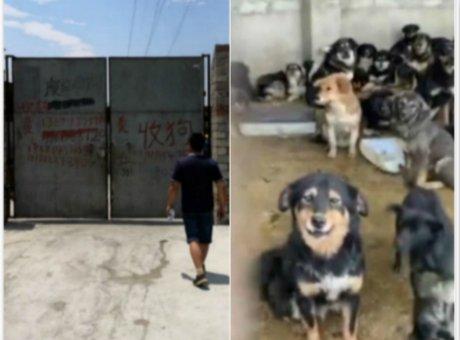 """凉山上演""""争狗大战"""" 当地政府介入遭爱狗人士反对"""