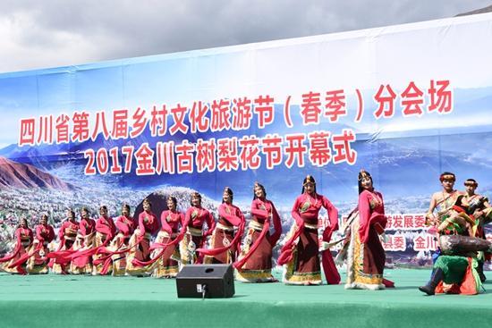 2017年金川古树梨花节开幕 到此赏花正当时