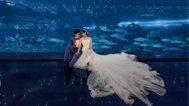 超漂亮的海洋馆婚照