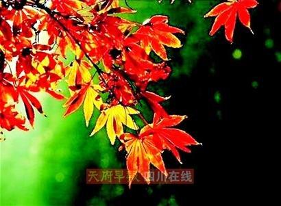 诗意欣赏红叶之美 三大目的地领略不同风景