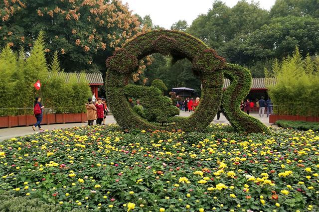 又该到人民公园赏菊了 今年微信扫花有惊喜