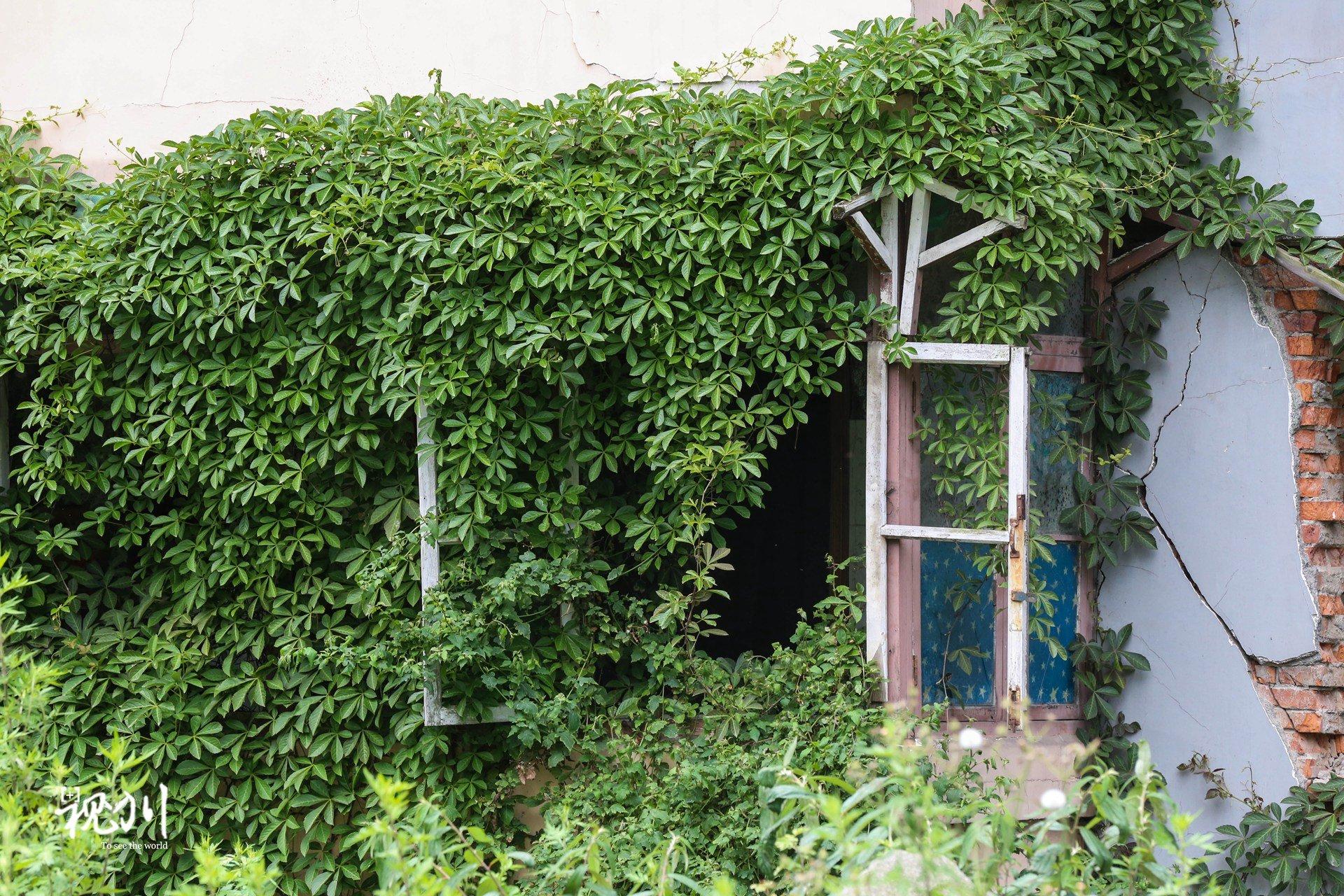 花墙 景观 墙 植物 1920_1280