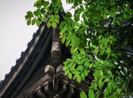 雅西高速边的小城之旅 看鸽子花吃特色小吃
