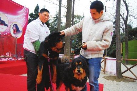 成都限养区22种烈犬禁养名单不是最终版(图)