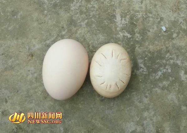 """泸州现""""哈雷彗星蛋"""" 专家:是不常见畸形蛋(图)"""