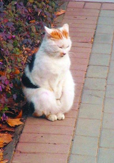 南京农业大学外的搓手猫(图片:舜网)-南京搓手猫走红网络 现已被