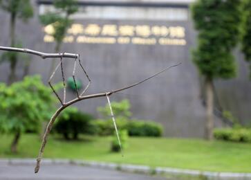 青城山下育出世界最长昆虫 全长64厘米(图)