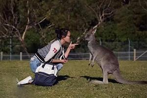 多图分享悉尼度假游攻略 农场看袋鼠赏日出简直太安逸