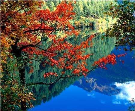 年年赏彩林今年大不同 专家教你如何品红叶