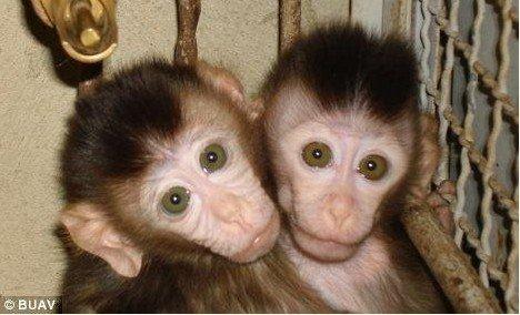 可怜的小猴子图片