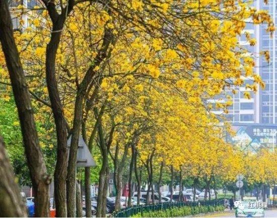 """潮州又一""""口袋公园"""" 意东堤渡口公园进入施工阶段!"""