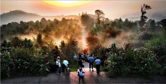 碧桂园·紫薇上城 半山豪宅,享受健康生活环境