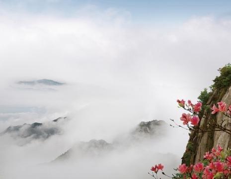 9句话读懂九华院子:⑥根清净的禅修居所