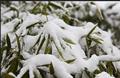 在九华院子 等今年冬天的第一场雪