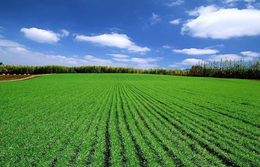 """""""十三五""""中国拟投6千亿建成4亿亩高标准农田"""