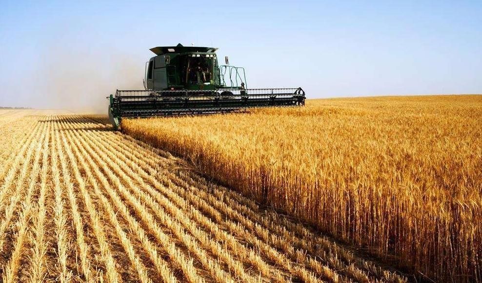 2019年全国粮食总产量创历史最高水平