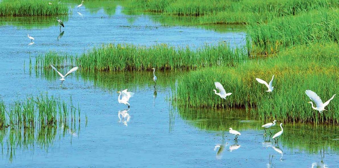 云南出台法规推进生物多样性保护