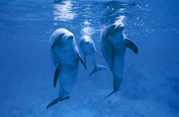 中国海洋馆如何保护水生动物:今年已救、放29只斑海豹