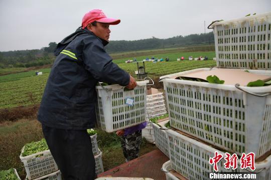 """海口""""菜篮子""""多举措保春节蔬菜市场稳定"""