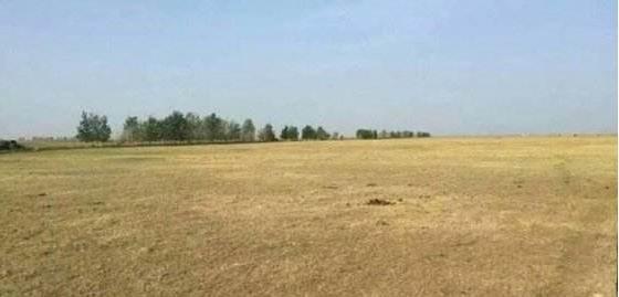 内蒙古受灾草场面积达5.5亿亩