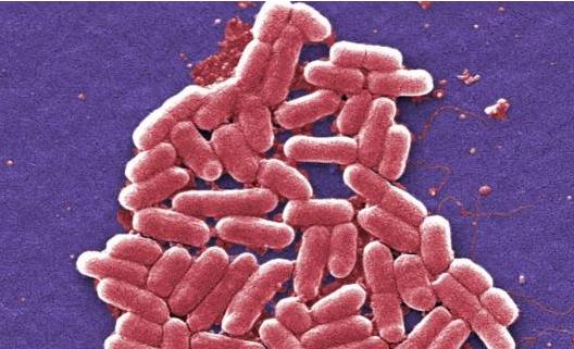 """抗生素滥用成动物保健品 """"超级细菌""""或横行引担忧"""